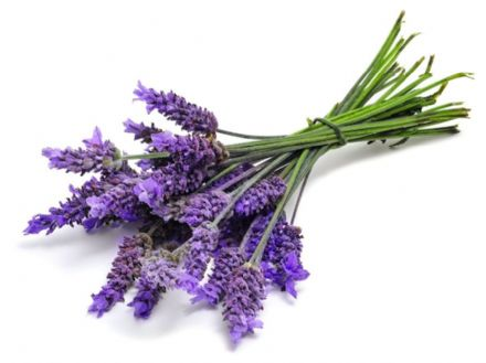 Candle Fragrance Oil - Lavender